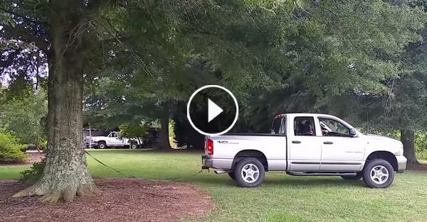 Ο σύζυγος της προσπαθεί να ξεριζώσει ένα τεράστιο δέντρο…ΜΗΝ ΠΑΡΕΤΕ όμως τα μάτια σας από το αγροτικό