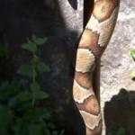 Νομίζεις ότι βλέπεις φίδι; Κοίτα πιο κοντά και σε 10 δευτερόλεπτα θα μείνεις με το στόμα ανοιχτό! (ΕΝΤΥΠΩΣΙΑΚΟ ΒΙΝΤΕΟ)