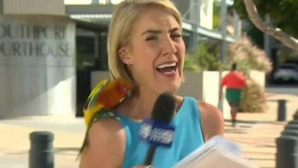 Bird-landing-on-reporters-shoulder (1)