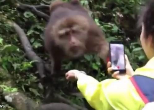 monkey1_497_355