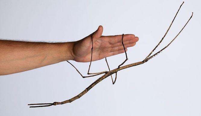 f-chinabug-a-20160506