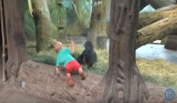 agoraki k gorillaki