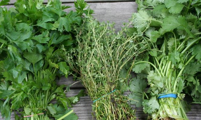herbs-666x399