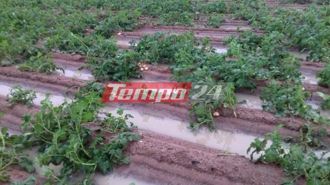 patates_plimmires_tempo24.gr_