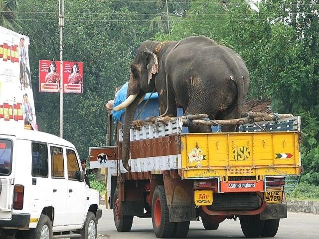 09-kerala-sued-indien-reise