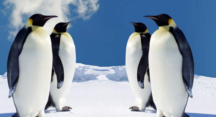 πιγκουίνοι από την Ανταρκτική