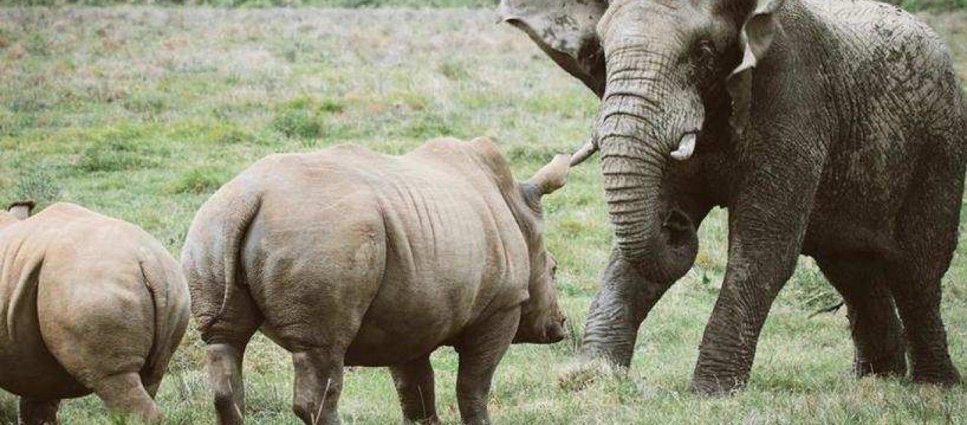 kariega-rhino-elephant-janniklaswedig