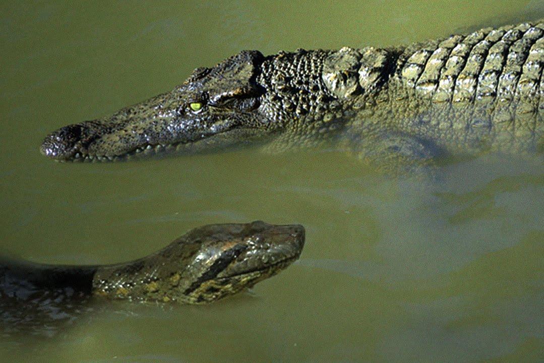 картинки крокодилов и змей войска рядом