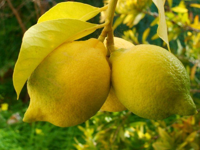 Lemonia_aftodioikisi-768x576