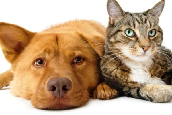 cat-and-dog-912x343_600_400_-1520156817