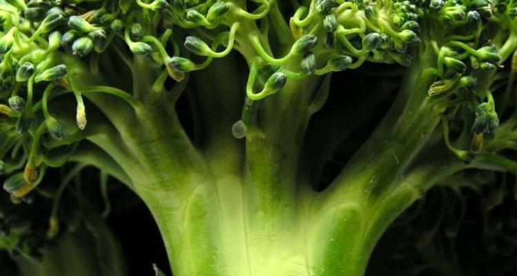 oi-12-kalyteres-fytikes-piges-proteinis