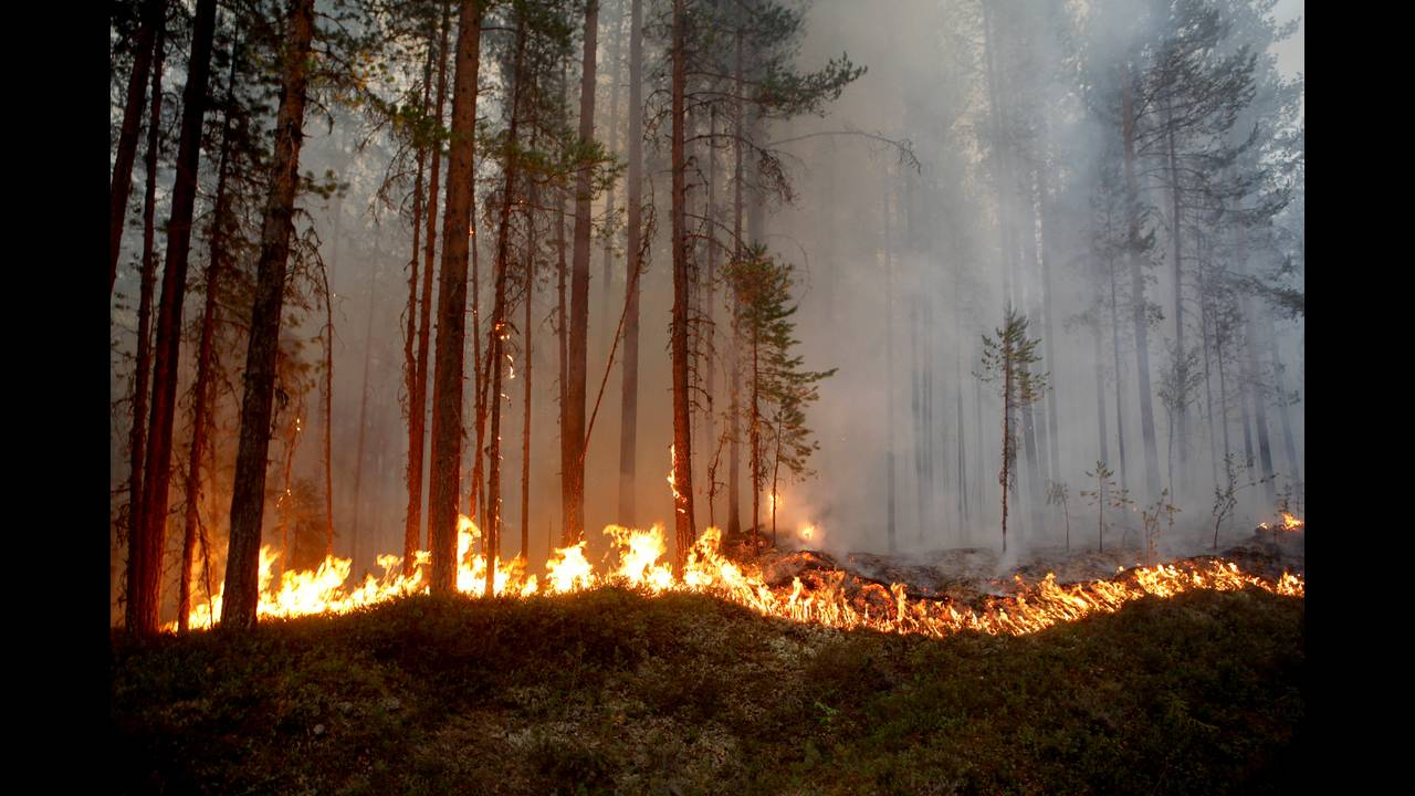 2018-07-17T130300Z_1119961043_RC1EB03DF170_RTRMADP_3_SWEDEN-WILDFIRES