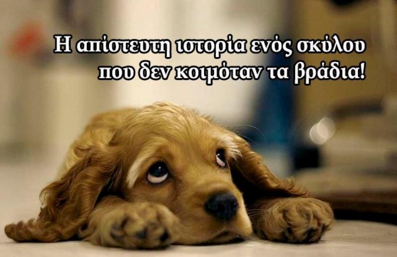 σκυλος ιστορια