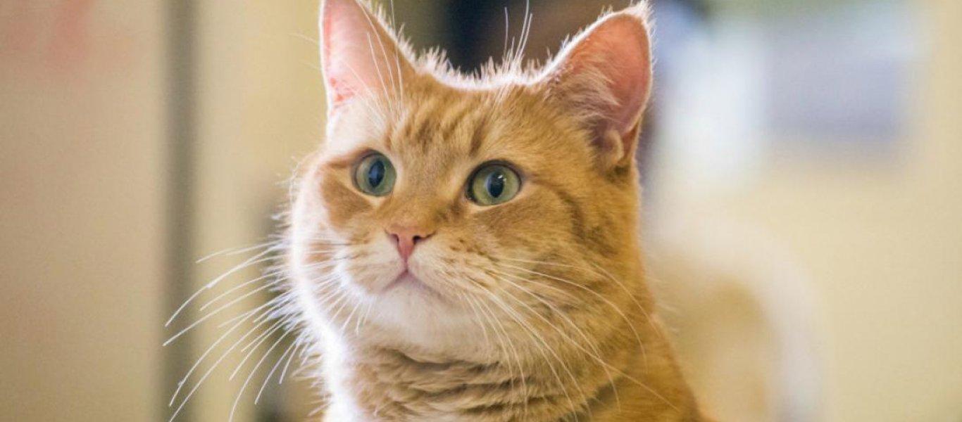 1d8623f78529 Πώς ένας γάτος χρησιμοποιήθηκε από τη CIA στον Ψυχρό Πόλεμο – Makeleio.gr