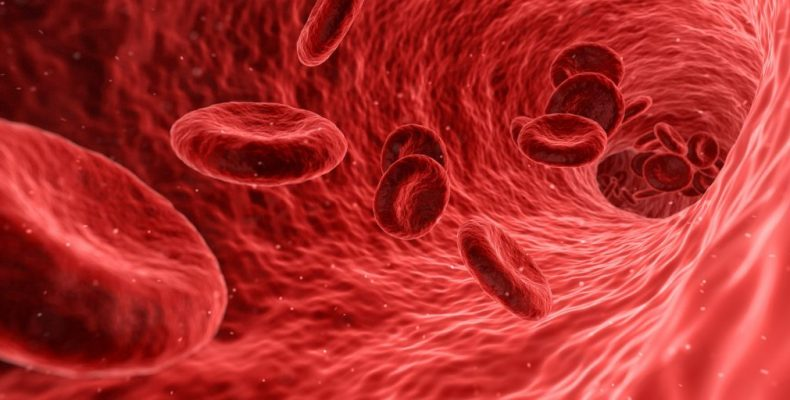 MaxPixel.freegreatpicture.com-Medical-Anatomy-Blood-Cells-Health-790x400