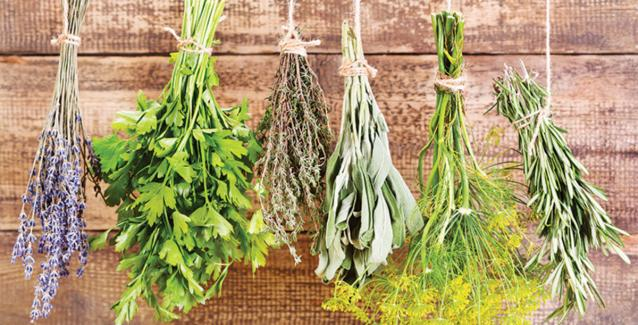 how-to-save-your-summer-herbs