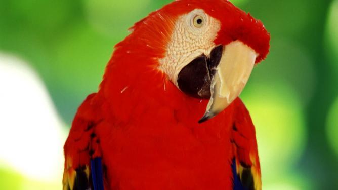 papagalos-omilitikos_a1
