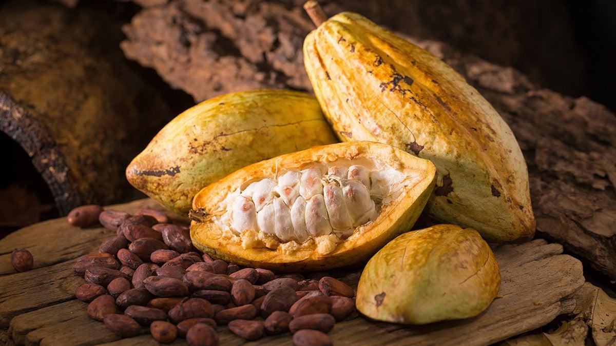 190621151248_cacao