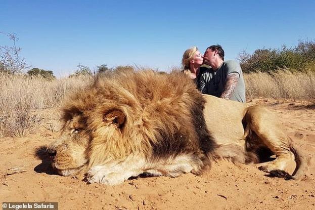 lion1_0