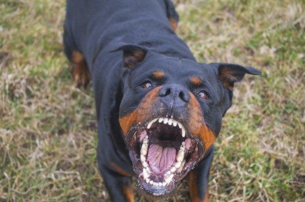 dog-angry