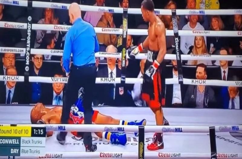 240381_boxer