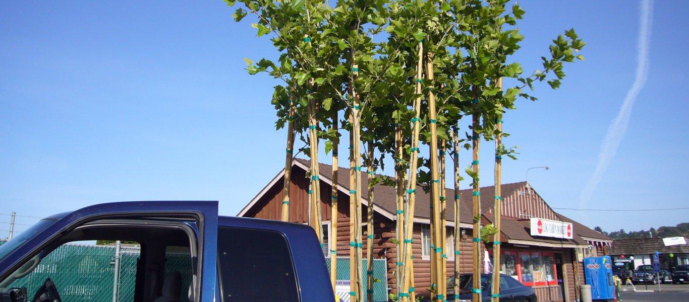trees-trees-trees-028