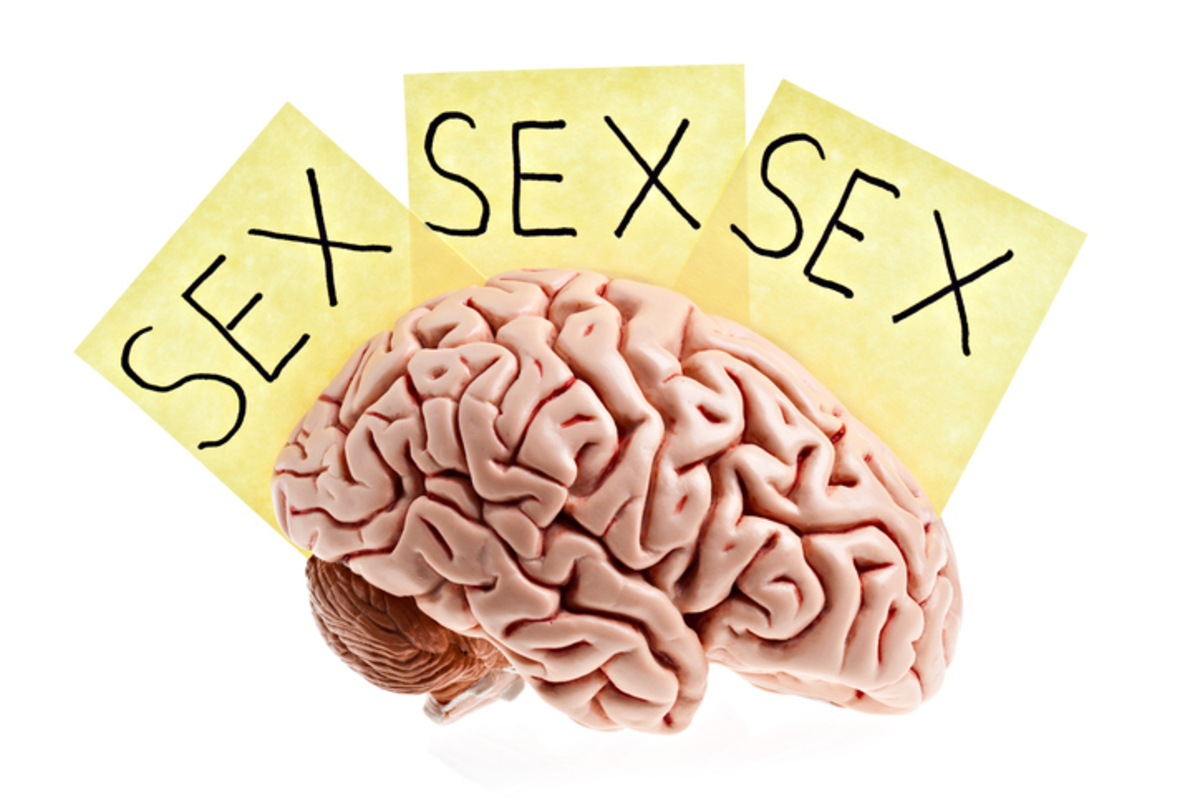 "A life size human brain with three notes saying ""sex"" on a white background. Available in XXXLarge.PLEASE CLICK HERE FOR MORE BRAINS."