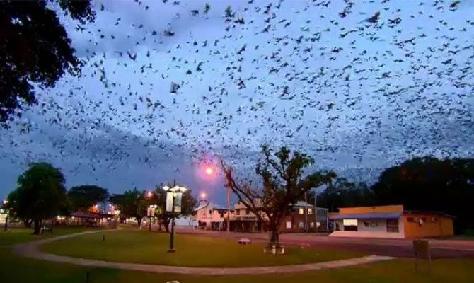 νυχτεριδες-670x400