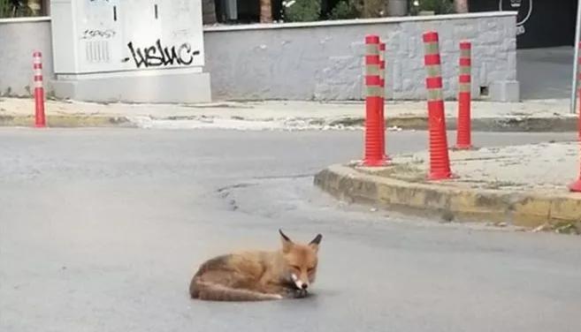 αλεπο