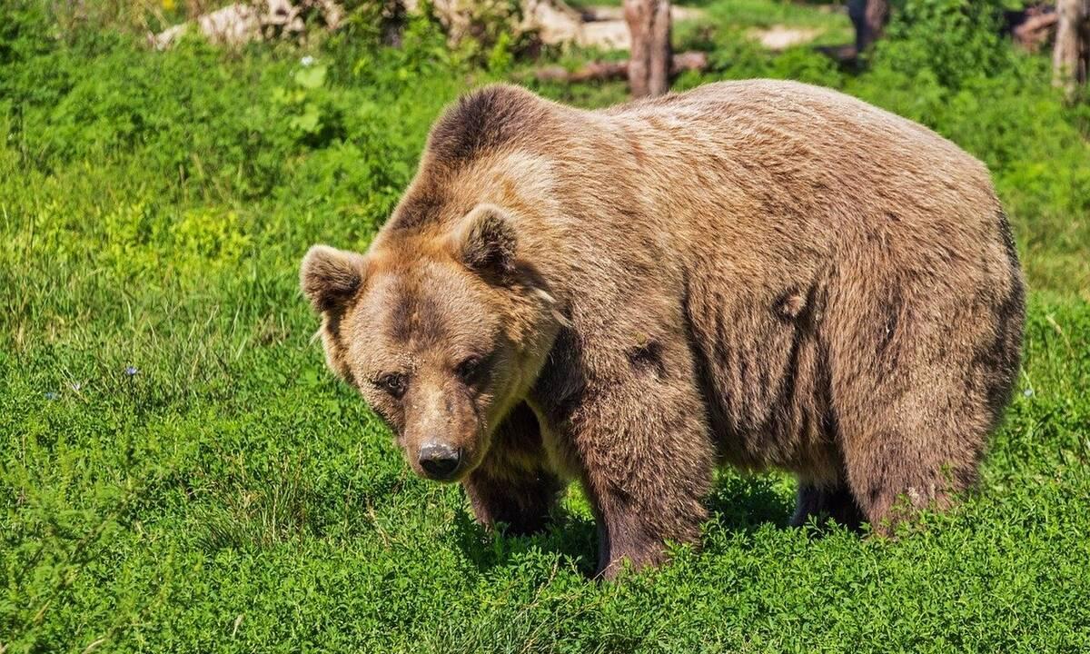 BearWoman
