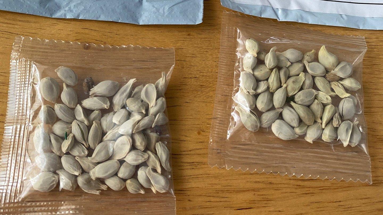 Mystery-Seeds-SPOROI