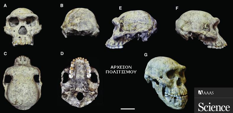 ΓΕΩΡΓΙΑ-Dmanisi-1800000 χρόνων κρανίο