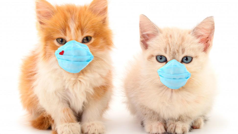 cats_coronaviru