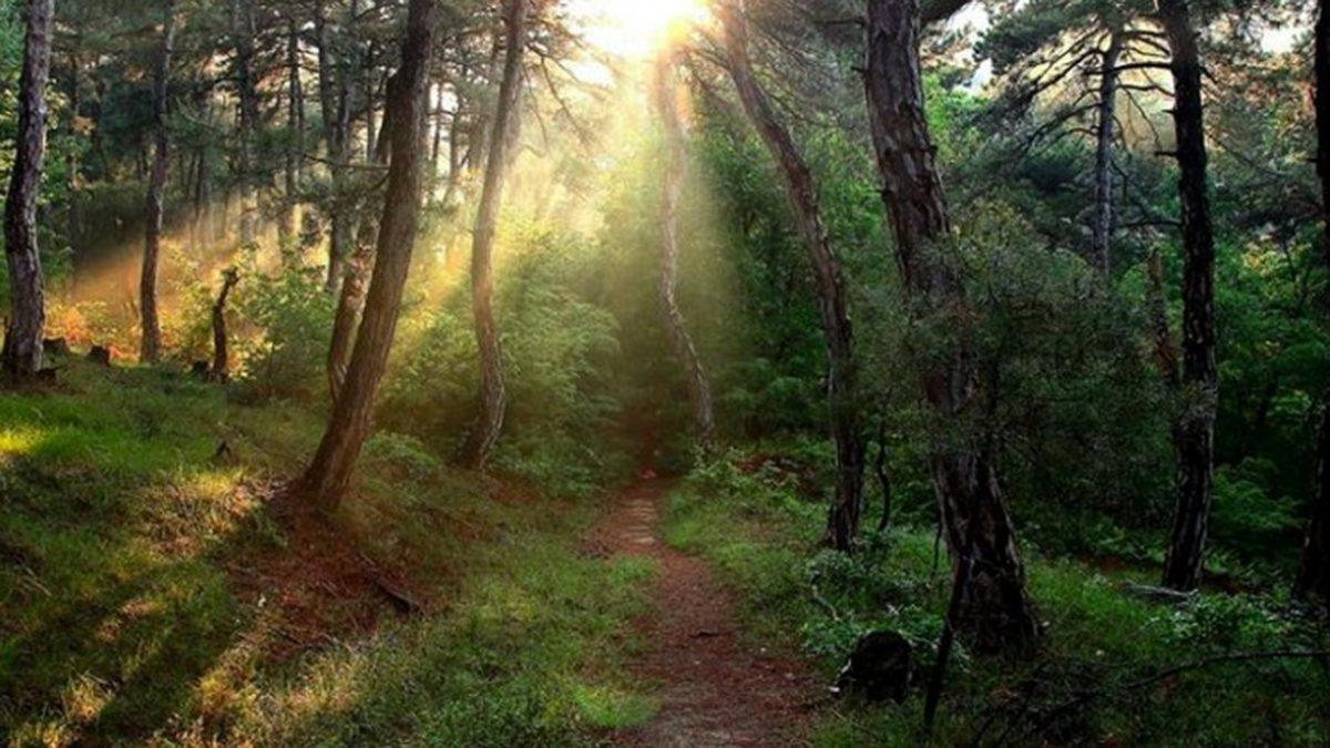 δάσοςς