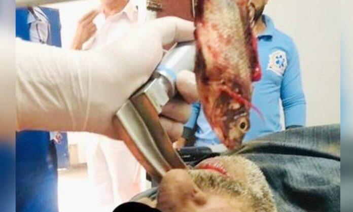 Tromaktiko-1135830-fisherman-fish-696x418