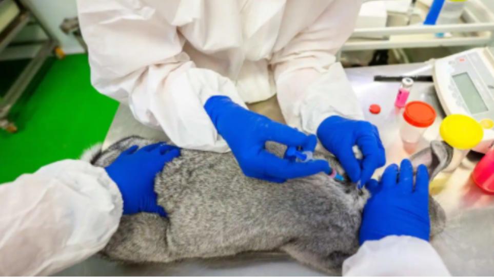 ρωσικό εμβόλιο κατά του κορονοϊού για τα ζώα