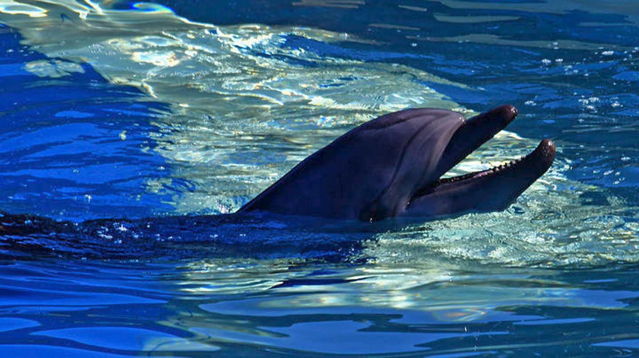 delfini_dolhpin_APEMPE_12_05_2021-2048x1149