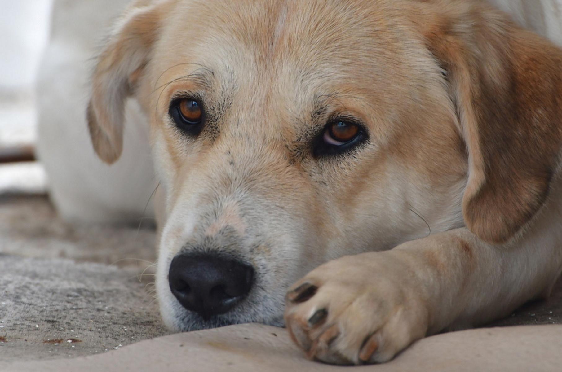 Σκύλος κάθεται σε τοποθεσία στην πόλη του Ναυπλίου, Παρασκευή 3 Ιανουαρίου 2020.  ΑΠΕ-ΜΠΕ /ΑΠΕ-ΜΠΕ/ΜΠΟΥΓΙΩΤΗΣ ΕΥΑΓΓΕΛΟΣ