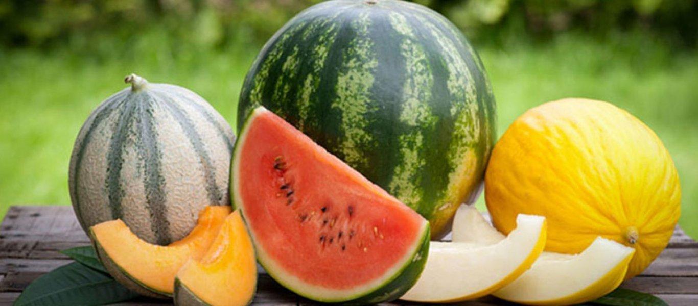 melon_watermelon22