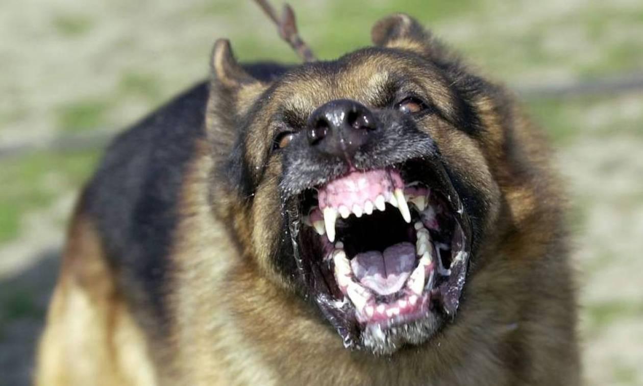 σκυλος επιθεση